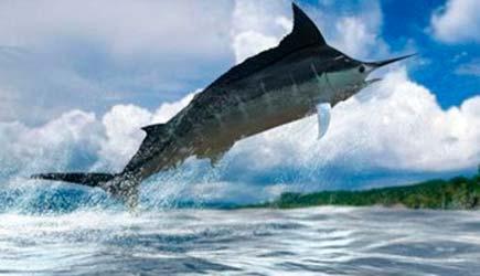 Maui fishing charters maui deep sea fishing maui sport for Start me up fishing