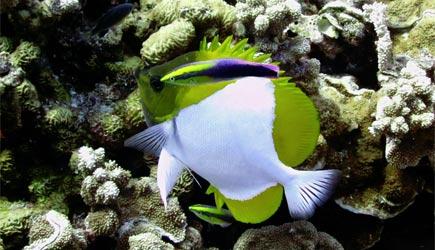 Maui Scuba Diving Molokini Diving Lanai Diving