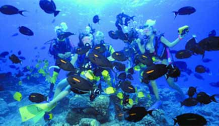 Scuba Diving Molokini Crater Maui Hawaii - YouTube
